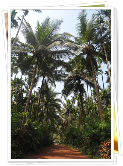 Selva y más selva