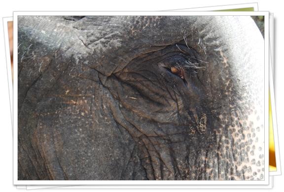 El ojo de la elefanta