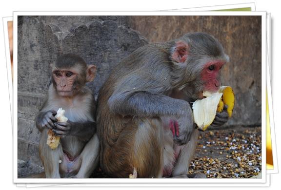 El templo de los monos