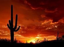 Viajar a Tucson