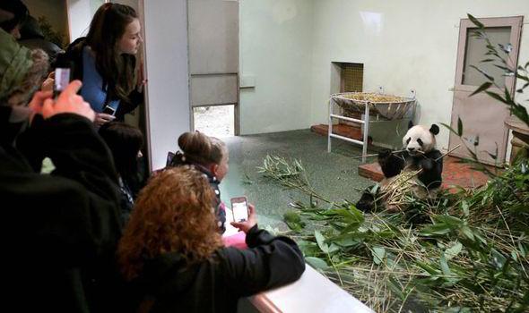 Oso panda en Edimburgo