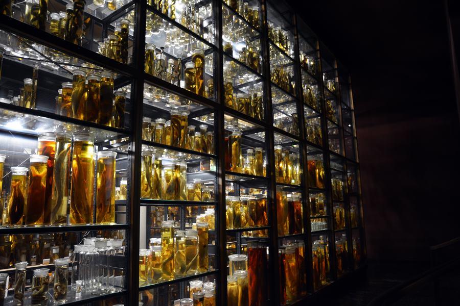 Visitar el museo de Historia natural de Berlín