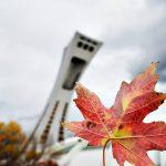 Dónde viajar en otoño