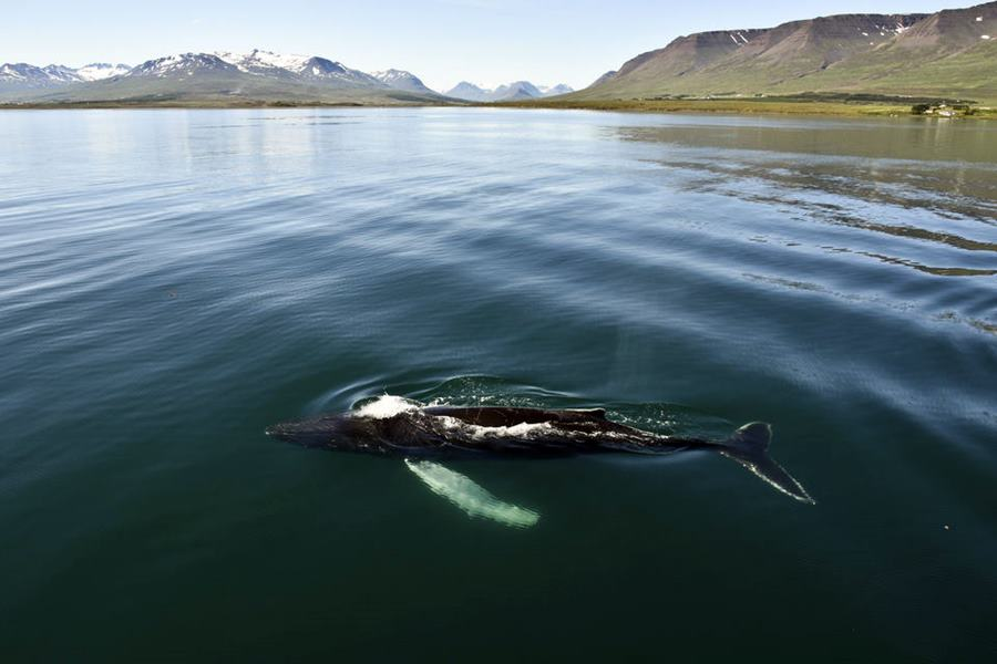 Qué ver y qué hacer en Akureyri