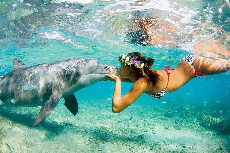 Postureo viajero - Delfín