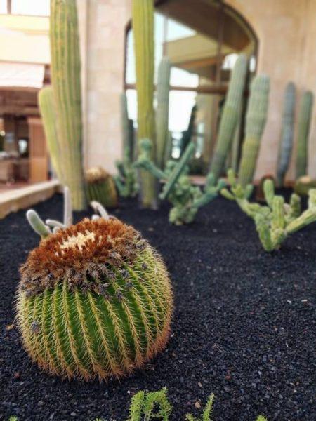 Todo incluido en Tenerife opiniones - cactus